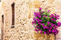 Pienza, Tuscany region, Italy. Old wall with flowers Stock Photo - Royalty-Freenull, Code: 400-06891819