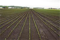 Farmland, Bradford, Ontario, Canada Stock Photo - Premium Royalty-Freenull, Code: 600-06892658