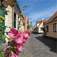 flat - Pink Hollyhock Flowers in Old Town of Dragor, Denmark Stock Photo - Premium Royalty-Freenull, Code: 600-06895023
