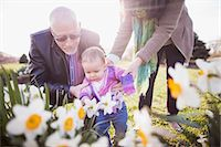 Grandparents with granddaughter amongst daffodils Stock Photo - Premium Royalty-Freenull, Code: 614-06897413