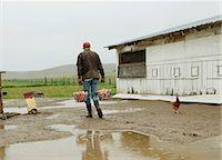 farming (raising livestock) - Farmer carrying two baskets of eggs Stock Photo - Premium Royalty-Freenull, Code: 614-06898455