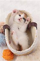 Tortoiseshell cat Stock Photo - Premium Royalty-Freenull, Code: 622-06900373
