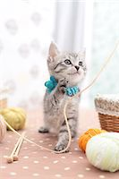 Mixed breed cat Stock Photo - Premium Royalty-Freenull, Code: 622-06900388