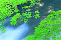 streams scenic nobody - Green maple leaves and water stream Stock Photo - Premium Royalty-Freenull, Code: 622-06900569