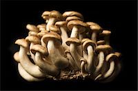 fungus - Brown Mushrooms on a Black Background Stock Photo - Premium Royalty-Freenull, Code: 659-06901589