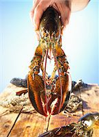 Hand holding a lobster Stock Photo - Premium Royalty-Freenull, Code: 659-06902544