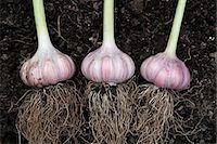 Two Garlic Bulbs; One Broken Stock Photo - Premium Royalty-Freenull, Code: 659-06902595