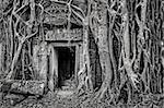 Ancient stone temple door and tree roots - monochrome vintage view, Angkor Wat, Cambodia