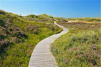 scenic view - Wooden Walkway through Dunes, Summer, Norddorf, Amrum, Schleswig-Holstein, Germany Stock Photo - Premium Royalty-Freenull, Code: 600-06964209