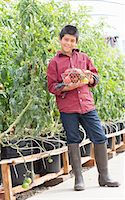 farm and boys - Boy picking fresh tomatoes Stock Photo - Premium Royalty-Freenull, Code: 614-06974034