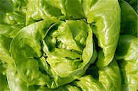 Butter lettuce head, close-up, overhead view, full frame Stock Photo - Premium Royalty-Freenull, Code: 6106-06987357