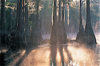 fog (weather) - Cypress Tree pond, Pine Log State Forest, Florida, USA Stock Photo - Premium Royalty-Freenull, Code: 6106-07012762