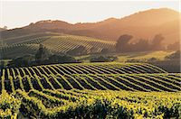 Vineyards, Napa Valley, California, USA Stock Photo - Premium Royalty-Freenull, Code: 6106-07016665