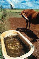 radio telescope - Bathtub and horse with array in field Stock Photo - Premium Royalty-Freenull, Code: 6106-07020898