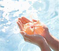 stamen - Person holding hibiscus flower, close-up Stock Photo - Premium Royalty-Freenull, Code: 6106-07025591