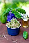Ramekin Full of Sprouts; Fresh Basil Stock Photo - Premium Royalty-Freenull, Code: 659-07027085