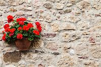 Pienza, Tuscany region, Italy. Old wall with flowers Stock Photo - Royalty-Freenull, Code: 400-07044846