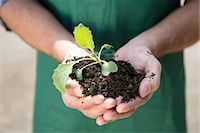 Close up of organic farmer holding seedling Stock Photo - Premium Royalty-Freenull, Code: 649-07063424