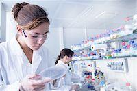 Biology student looking at petri dish Stock Photo - Premium Royalty-Freenull, Code: 649-07064914