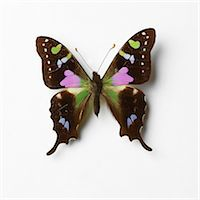 Butterfly Stock Photo - Premium Royalty-Freenull, Code: 649-07065286