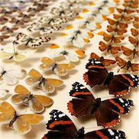 Collection of butterflies Stock Photo - Premium Royalty-Freenull, Code: 649-07065287