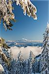 View of Mount Shasta form Mount Ashland, Southern Orgon, USA Stock Photo - Premium Rights-Managed, Artist: Matt Brasier, Code: 700-07067221