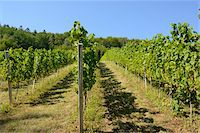 Landscape of Vineyard, Styria, Austria Stock Photo - Premium Royalty-Freenull, Code: 600-07067514