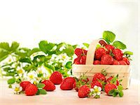 strawberries - Fresh strawberries with leaves, flowers and a woodchip basket Stock Photo - Premium Royalty-Freenull, Code: 659-07069356