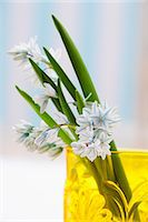 spring flowers - Spring flowers in a yellow vase Stock Photo - Premium Royalty-Freenull, Code: 659-07069385