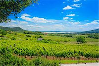 A panoramic view over the wine-growing region of Badacsony, Lake Balaton, Hungary Stock Photo - Premium Royalty-Freenull, Code: 659-07069754