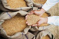 Man holding wheat grains from a sack in his cupped hands, Anaj Mandi, Sohna, Gurgaon, Haryana, India Stock Photo - Premium Royalty-Freenull, Code: 630-07071183