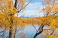 fall trees lake - Snow capped mountains and autumn trees, Lake Alexandrina, Canterbury Region, South Island, New Zealand, Pacific Stock Photo - Premium Rights-Managednull, Code: 841-07080565