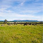 Herd of cows on farmland on the West Coast, South Island, New Zealand, Pacific Stock Photo - Premium Rights-Managed, Artist: Robert Harding Images, Code: 841-07080613