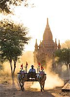 Bullock cart on a dusty track among the temples of Bagan with light from the setting sun shining through the dust, Bagan, Myanmar (Burma), Southeast Asia Stock Photo - Premium Rights-Managednull, Code: 841-07081617