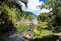 Botanical Gardens on Nevis Island, St. Kitts and Nevis, Leeward Islands, West Indies, Caribbean, Central America Stock Photo - Premium Rights-Managednull, Code: 841-07083390
