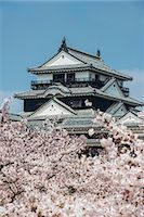 Cherry blossom and the Matsuyama Castle, Shikoku, Japan, Asia Stock Photo - Premium Rights-Managed, Artist: Robert Harding Images, Code: 841-07083665