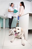 Woman with pet dog in veterinarian's office Stock Photo - Premium Royalty-Freenull, Code: 6116-07086643