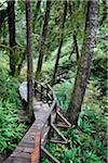 Wooden walkway through forest, Pacific Rim National Park Reserve, west coast of British Columbia, Canada