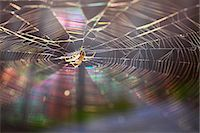 fantastically - Spider and web Stock Photo - Premium Royalty-Freenull, Code: 622-07108846