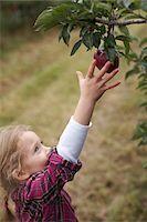 single fruits tree - Girl Picking Apples in Orchard, Milton, Ontario, Canada Stock Photo - Premium Royalty-Freenull, Code: 600-07110430