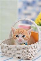 Munchkin Stock Photo - Premium Royalty-Freenull, Code: 622-07117853