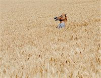 funny looking people - Wheat Fields In Washington. A Person Wearing A Horse Head Animal Mask Emerging Above The Ripe Corn. Stock Photo - Premium Royalty-Freenull, Code: 6118-07122121