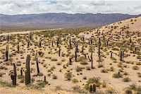 Field of cactusses in  Los Cardones National Park, Argentina. Stock Photo - Royalty-Freenull, Code: 400-07124212