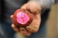 Man holding a turnip Stock Photo - Premium Royalty-Freenull, Code: 614-07145975