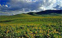 Montana, America Stock Photo - Premium Rights-Managednull, Code: 859-07149752