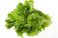 Sunny Leaf Lettuce Stock Photo - Premium Rights-Managednull, Code: 859-07149901