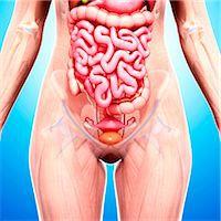Female anatomy, computer artwork. Stock Photo - Premium Royalty-Freenull, Code: 679-07152410