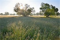 streams scenic nobody - Meadow and Willow Trees at Morning with Sun, Kahl, Alzenau, Bavaria, Germany Stock Photo - Premium Royalty-Freenull, Code: 600-07156453