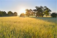 streams scenic nobody - Meadow and Willow Trees at Morning with Sun, Kahl, Alzenau, Bavaria, Germany Stock Photo - Premium Royalty-Freenull, Code: 600-07156454