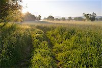 streams scenic nobody - Path in meadow with sun in Spring, Kahl, Alzenau, Bavaria, Germany Stock Photo - Premium Royalty-Freenull, Code: 600-07156455